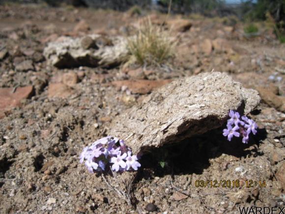00 N. Willows Ranch Rd., Kingman, AZ 86401 Photo 12