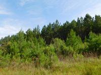 Home for sale: Satilla Plantation, Waynesville, GA 31566