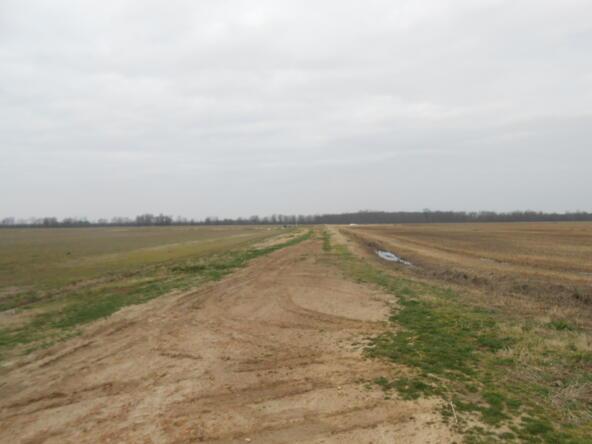 402.93 Acres Long Creek, Waldenburg, AR 72475 Photo 11