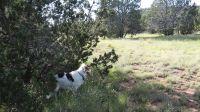 Home for sale: 1520 Sierra Verde Ranch On Bucks Rd., Seligman, AZ 86337