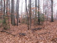 Home for sale: 0 Huggins Rd. Lot 5 & 6, Tyrone, NY 14887