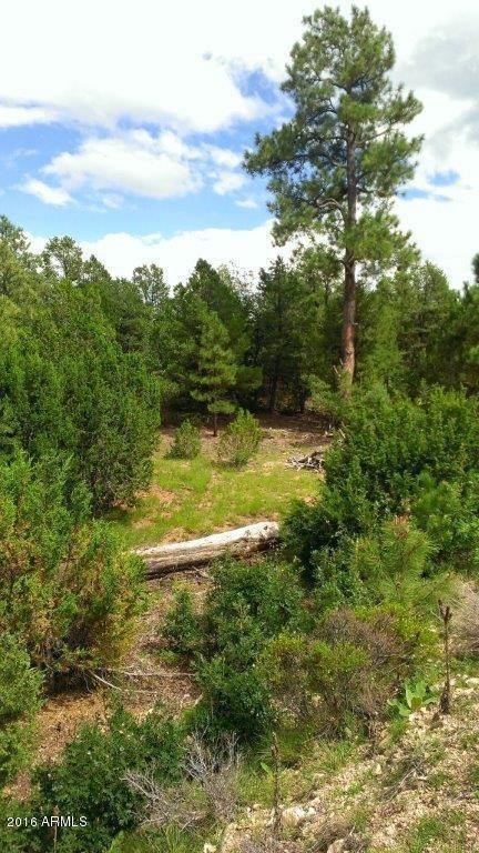 7205 Mogollon Trail, Happy Jack, AZ 86024 Photo 4