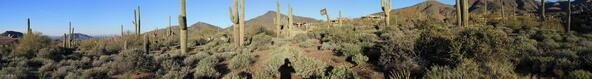 41927 N. Saguaro Forest Dr., Scottsdale, AZ 85262 Photo 17