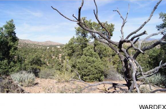 9999 N. Trap Springs Rd., Hackberry, AZ 86411 Photo 21