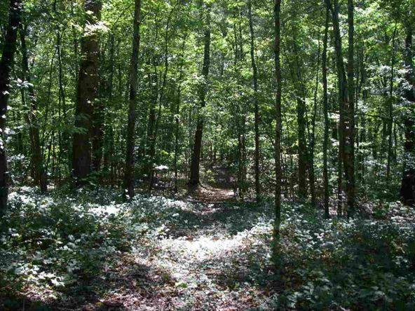 Lot A Edwards Point Rd., Signal Mountain, TN 37377 Photo 2