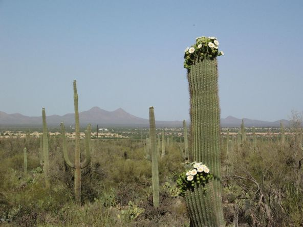 12229 W. Fort Lowell, Tucson, AZ 85743 Photo 5