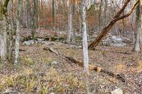 Home for sale: 0 Ripple Ln., Owens Cross Roads, AL 35763