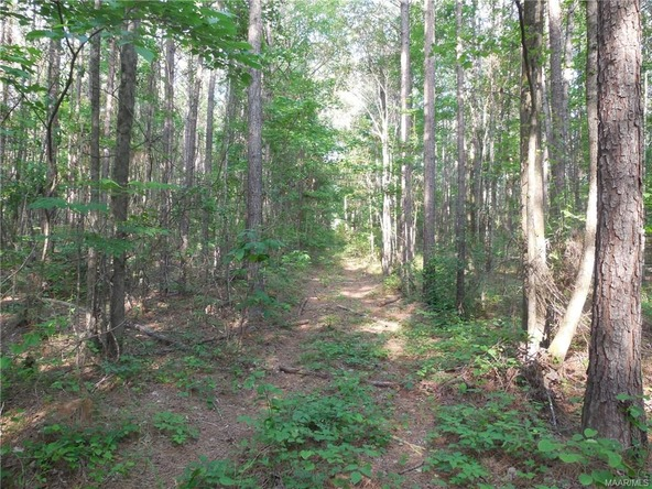 17462 Central Plank Rd., Eclectic, AL 36024 Photo 3