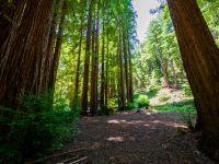 Home for sale: 436 Bean, Boulder Creek, CA 95006