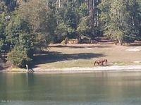 Home for sale: 42725 W. Altoona Rd., Altoona, FL 32702