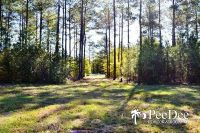 Home for sale: Tract #2 (45 Ac) Wallace, Sc 29596, Wallace, SC 29596