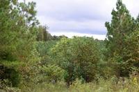 Home for sale: 0 Chestnut Grove Cemetery Rd., Pulaski, TN 38478