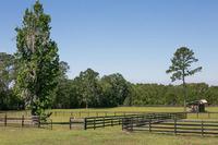 Home for sale: 15500 W. Hwy. 316, Williston, FL 32696