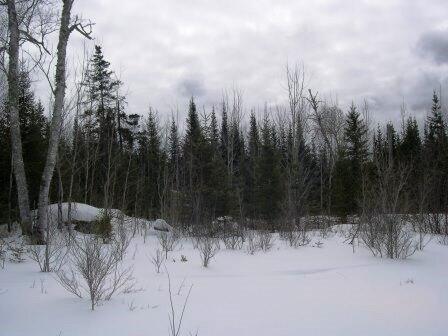 Gunflint Trail, Grand Marais, MN 55604 Photo 12