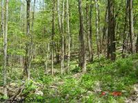 Home for sale: Lot 38 Tory Camp Rd., Harman, WV 26270