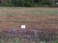 Home for sale: Lot 5 Indigo Ln., Jesup, GA 31545