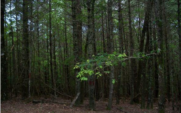104 Red Oak Rd., Suches, GA 30572 Photo 11
