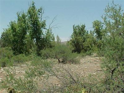 3588 E. Ripple Rd., Camp Verde, AZ 86322 Photo 1