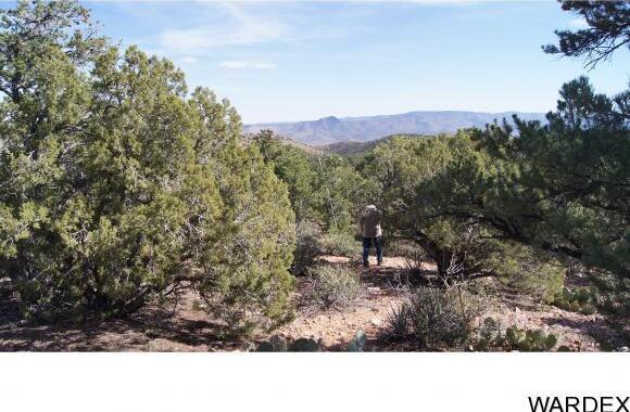 9999 N. Trap Springs Rd., Hackberry, AZ 86411 Photo 20