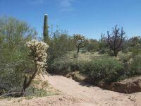 Home for sale: 31 S. Cattle Tank, Marana, AZ 85658