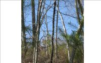 Home for sale: Lot 2 Brasstown Creek Ridg, Brasstown, NC 28902