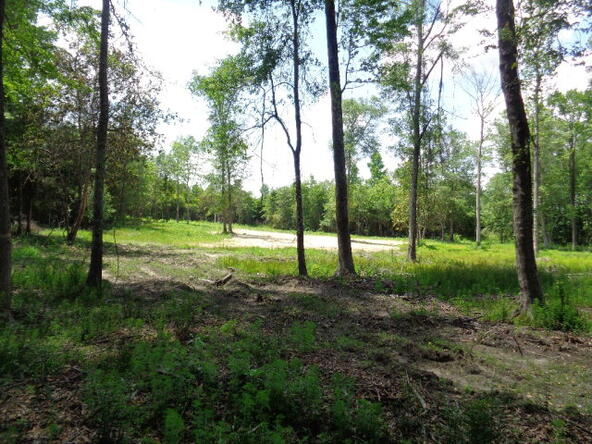 7.1+-Ac Lucy Grade Rd., Ashford, AL 36312 Photo 16