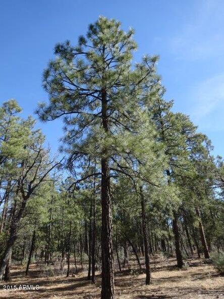 1090 W. Sadler Ln., Lakeside, AZ 85929 Photo 9
