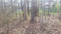 Home for sale: Lot 181 South Cloverdale Ln., Battlefield, MO 65619