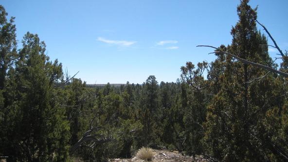 2955 Lodgepole Rd., Overgaard, AZ 85933 Photo 4