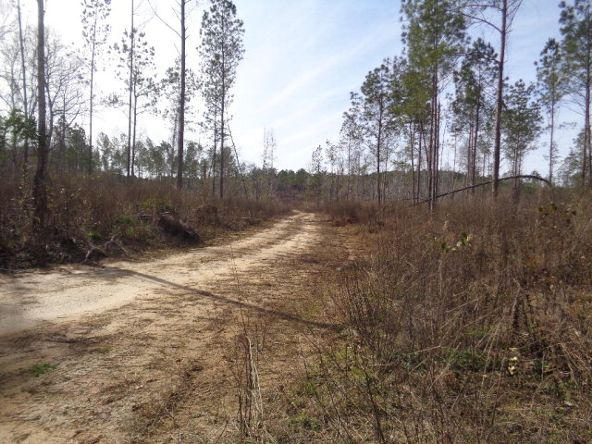 275+/-Ac Cty Rd. 46/Cty Rd 97, Abbeville, AL 36310 Photo 50