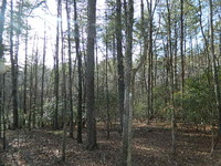 Home for sale: Old Village Rd., Sautee Nacoochee, GA 30571