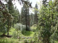 Home for sale: 0 Forest Service Rd. #263, Riggins, ID 83549
