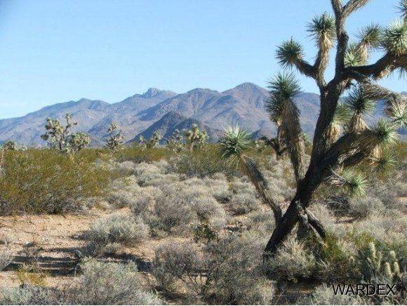 3529-D Arroyo Rd., Yucca, AZ 86438 Photo 11