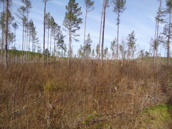 275+/-Ac Cty Rd. 46/Cty Rd 97, Abbeville, AL 36310 Photo 30