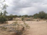Home for sale: 14465 W. Applejack, Tucson, AZ 85736