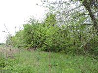 Home for sale: East Farm Rd. 56, Fair Grove, MO 65648