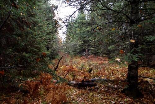 Lot 1 - 5813 Hwy. 70, Eagle River, WI 54521 Photo 5