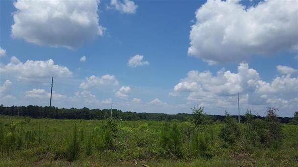 Tbd County Rd. 40, Coffee Springs, AL 36318 Photo 6