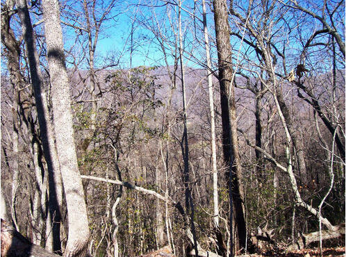 Hwy. 64 East, Hayesville, NC 28904 Photo 4