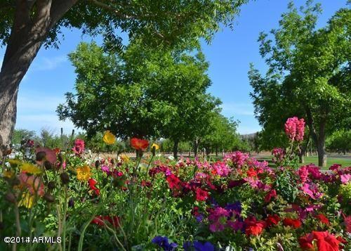 20281 E. Via de Arboles --, Queen Creek, AZ 85142 Photo 2