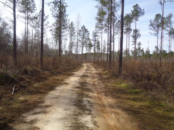 275+/-Ac Cty Rd. 46/Cty Rd 97, Abbeville, AL 36310 Photo 43