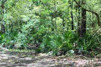 Home for sale: 527 Seminole Ln., Sopchoppy, FL 32358