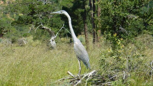 220 W. Zane Grey Cir., Christopher Creek, AZ 85541 Photo 19