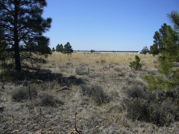 10558 E. White Horse Lake, Parks, AZ 86018 Photo 18