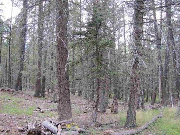 119 W. Pecos Canyon Estates Rd., Tererro, NM 87573 Photo 28