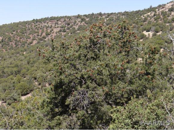 808 Sierra Verde Ranch, Seligman, AZ 86337 Photo 8