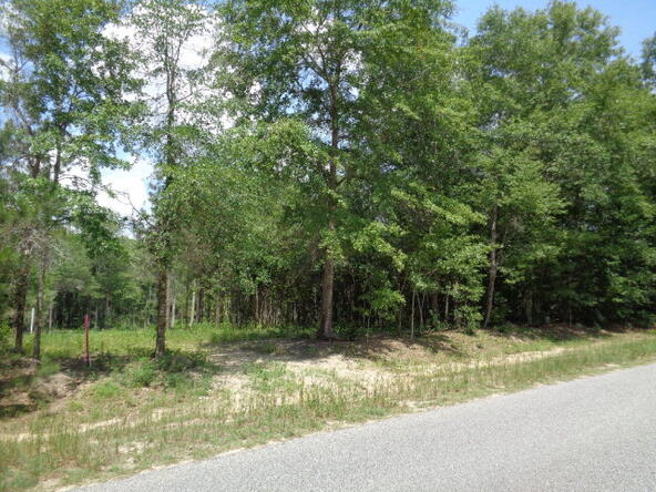 7.1+-Ac Lucy Grade Rd., Ashford, AL 36312 Photo 4