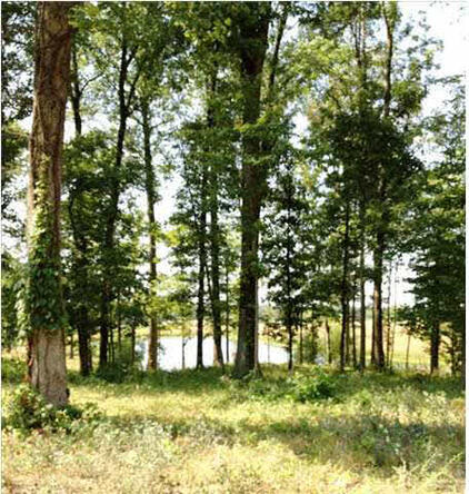 5791 Serenity Dr. Lot 14, Mount Vernon, IN 47620 Photo 34