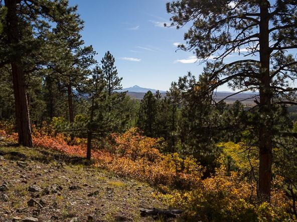 Tbd S. Sage Grouse Rd., Lot 10, Placerville, CO 81430 Photo 19