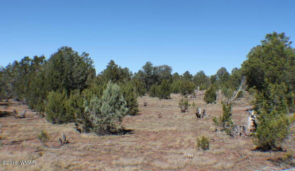 8 Acres Off Of Acr N. 3114, Vernon, AZ 85940 Photo 9